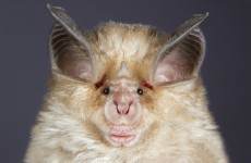 Chinese bats likely source of SARS virus – report