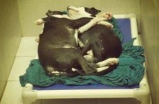 Blind puppy and 'seeing eye' brother adopted after adorable hug goes viral