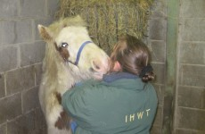 The foal left behind after his mother was beaten to death has a new home