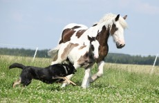 Dog bites horse, woman brought to court