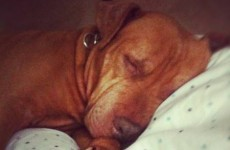 Abused dog's new owner writes touching open letter to person who hurt her