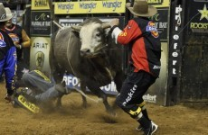 Yee-haw! Here's Chad Ochocinco getting thrown off a wild bull