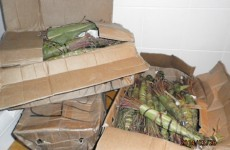 Revenue seize €50,000 worth of khat (and 100 hair curlers) in Cork