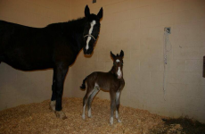Anger after 4 foaling mares are put down in Kilkenny despite offers of homes