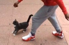 Man arrested after a video of him kicking a cat goes viral