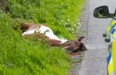 Horse attached to sulky dies after smashing into oncoming vehicle