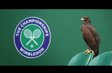 Rufus the Hawk and super stringers: A look behind the scenes at Wimbledon