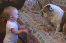 It's a baby arguing with a bulldog… what are you waiting for?