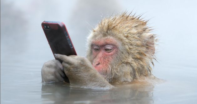On the Wild Side: 10 of the very best images from this year's wildlife photography awards