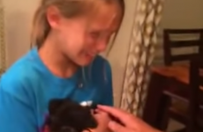 8-year-old girl gets a puppy for her birthday, and reacts with brilliant emotion
