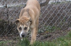 Dogs left for days without food and water in ISPCA run shelter