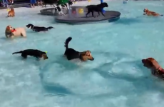 This dog pool party is the happiest thing you'll see today