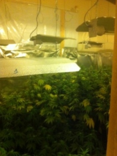 Man charged over growhouse with €62,000 worth of cannabis plants