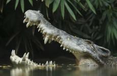 Drunken hunter fights off Australian croc with an eye-poke