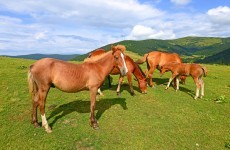 Guidelines banning cruelty to horses by traders introduced