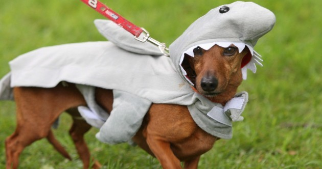 Your pets hate Halloween – here's how to make them feel better