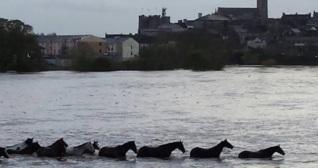 Rescuers mount daring mission to save horses from rising river