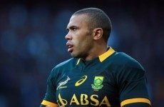 Late Habana try helps South Africa to see off Parisse-inspired Italians