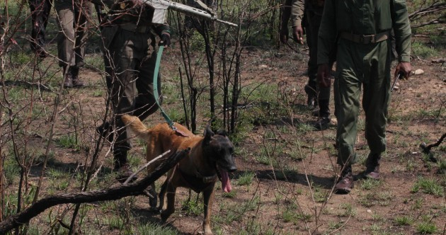 How dogs are being used to save wild animals in Africa