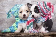 It's cold… but is the weather going to get any worse?
