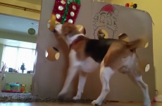 This dog from Ennis just got the best early Christmas present