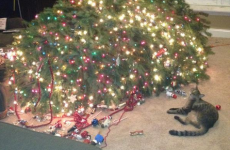8 cats who have already defeated the evil Christmas tree invaders
