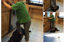Here's Sarah Palin's response to criticism over pics of her son standing on their dog