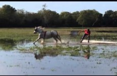 Horse-powered wakeboarding is the most fun you can have in a waterlogged field
