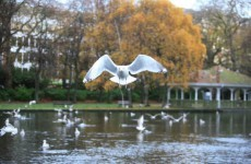 Seagulls back in spotlight as Government seeks to 'eliminate' them from Department of Health