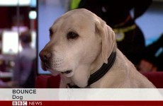 This BBC News caption is both simple and brilliant