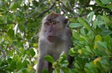 Couple to leave all their money to their pet monkey