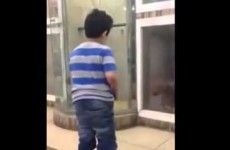 Kid taunts dog stuck behind glass, gets spectacularly owned anyway