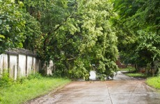 Watch out for fallen trees on the roads this morning