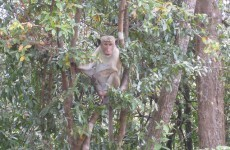 These male monkeys like hanging out with the lads