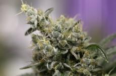 Major cannabis seizure in north Dublin suburb