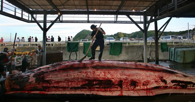 Japan is going to have one more go at proving its whale kills are scientific