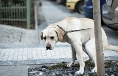 They can DNA test dog poo now, but you don't have to worry just yet…