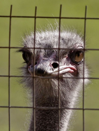 Quiz: Nigel Pearson wants to know.. are you an ostrich?