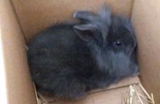 Danish radio station kills baby rabbit with bicycle pump