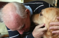Bray man Joe Bollard says his guide dog taught him to 'look forward and not back'