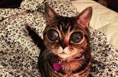 This cat with alien eyes has a heartbreaking story and it's taking the internet by storm