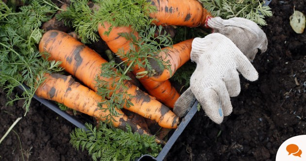 Want to grow your own food? Then, trust me, get some decent tools