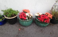 Gardaí want to know if you've had a load of flowers go missing