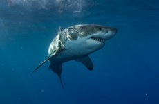 Diver killed by shark as daughter watches on