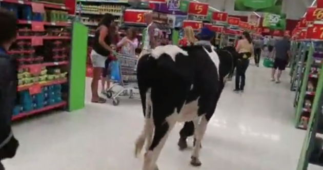 There are cows in supermarkets as people lose the plot over the price of milk