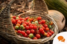 Grow your own divine tomatoes at home and leave the consumer-bred blandness of the supermarket variety behind