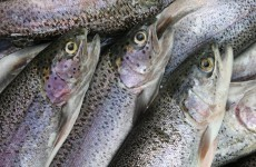 3,700 fish found dead in river after suspected chemical discharge