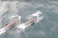 Watch: Stunning footage of a very close-up dolphin encounter off Malin Head
