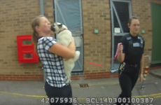 A stolen pug was reunited with her owner, and went absolutely NUTS