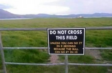 12 'Irish' images that have taken the internet by storm